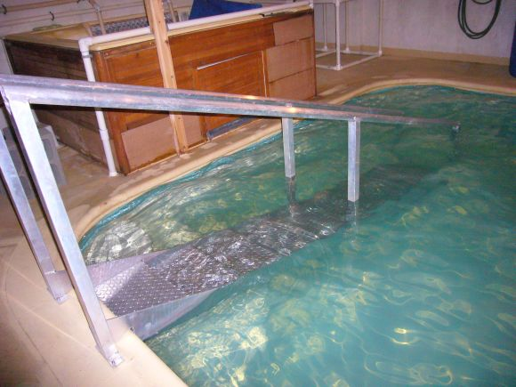 Accessibility Pool Steps with Reduced Riser Height